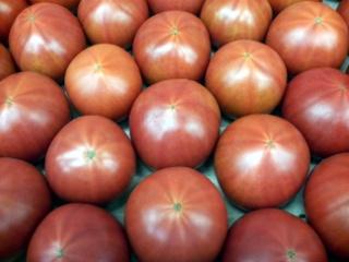 やすトマト02