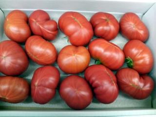 フルーツトマト 有さん02