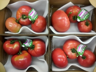 トマト 枝付き