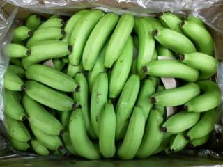 青バナナ02