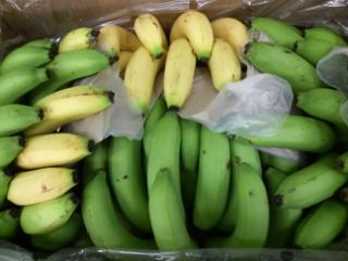 青バナナ10