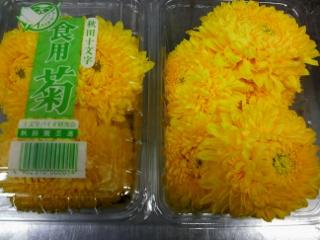 食用菊04