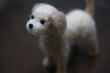 羊毛わんこ