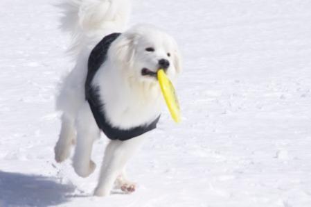 ふじけん 雪遊び