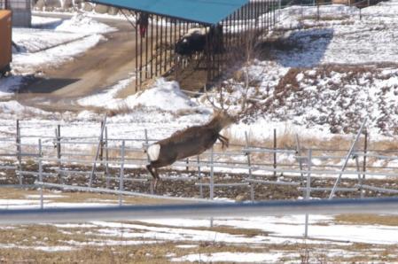 雪遊び 鹿