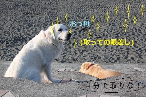 s-IMG_3306_20120114120518.jpg
