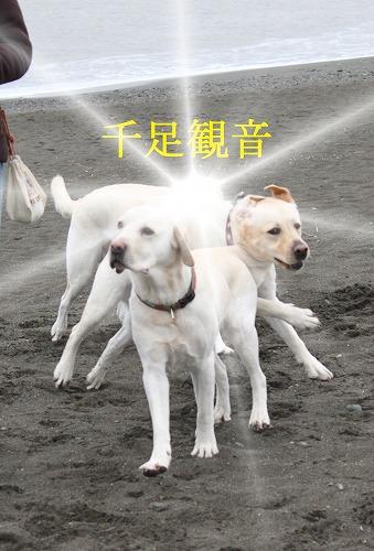 s-IMG_3370_20120124112603.jpg