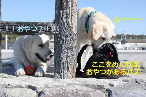 s-IMG_4774_20120329205340.jpg