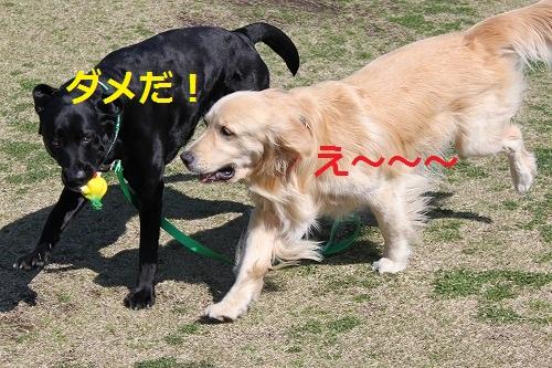 s-IMG_4871.jpg