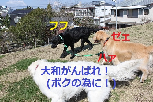 s-IMG_4877.jpg