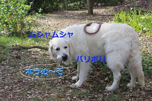 s-IMG_5088_20120411154224.jpg