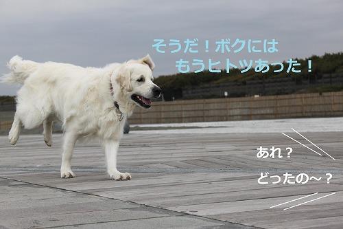 s-IMG_5253_20120420185318.jpg