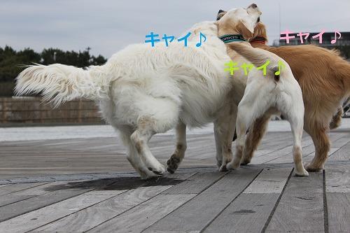 s-IMG_5260.jpg