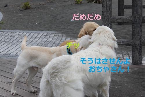 s-IMG_5262_20120420185636.jpg