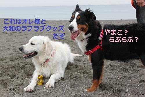 s-IMG_5270_20120423141127.jpg