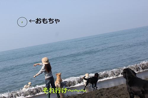 s-IMG_5356_20120430214139.jpg