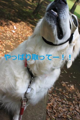 s-IMG_5539_20120509212623.jpg