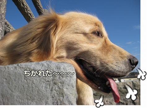 s-IMG_5742_20121010223838.jpg