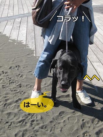 s-IMG_5763_20121010224408.jpg