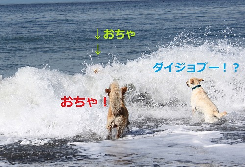 s-IMG_6175_20120612133943.jpg