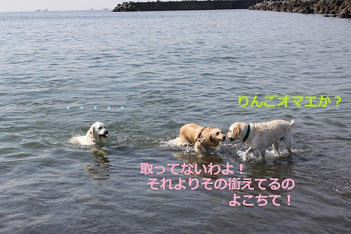 s-IMG_6449_20120628211836.jpg