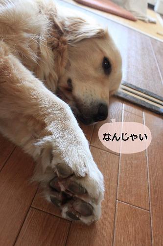 s-IMG_6509.jpg