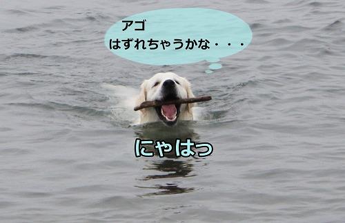 s-IMG_6824.jpg