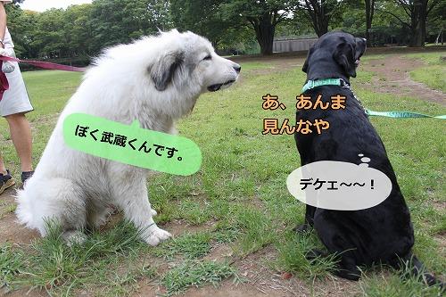 s-IMG_7227_20120808231436.jpg