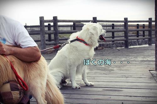 s-IMG_7329_20120817213511.jpg