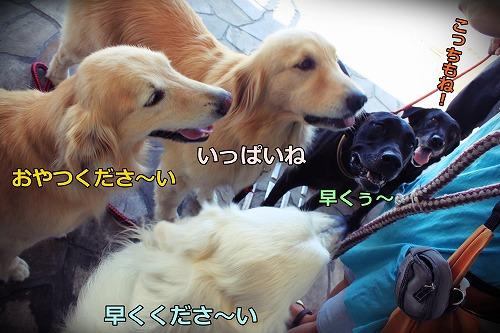s-IMG_7454_20120822192759.jpg