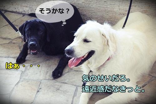 s-IMG_7503.jpg