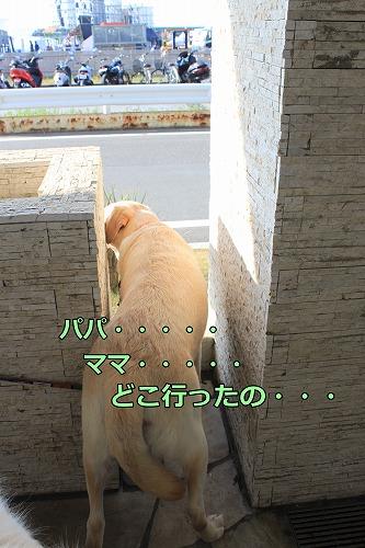 s-IMG_7523_20120830151726.jpg
