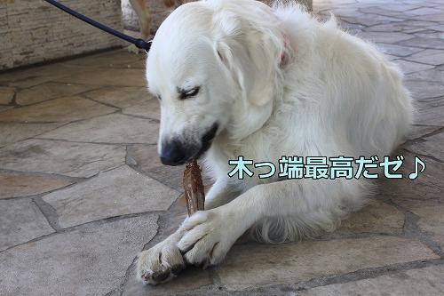 s-IMG_7526_20120830151804.jpg