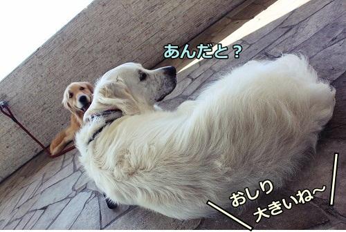s-IMG_7648.jpg