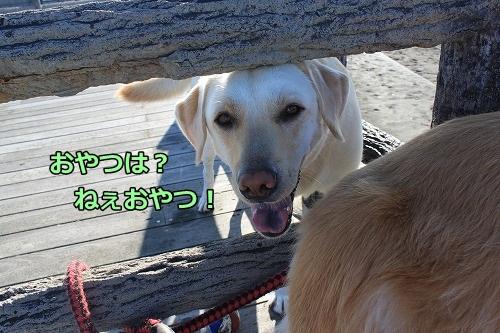 s-IMG_7780_20120925104109.jpg