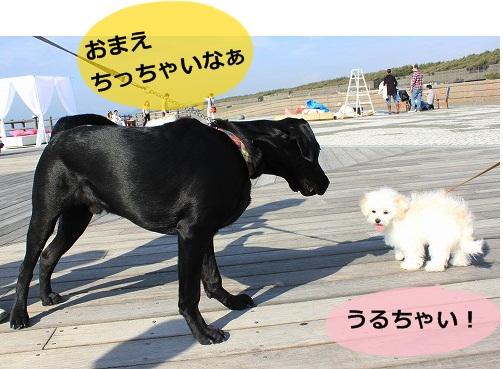 s-IMG_7980_20121017151650.jpg
