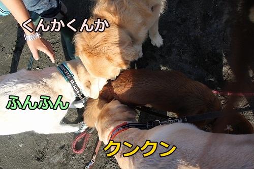 s-IMG_8019.jpg