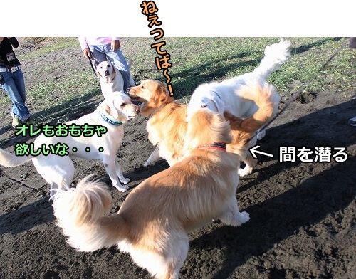 s-IMG_8029_20121023195254.jpg