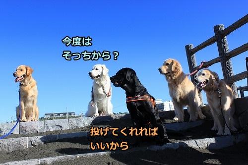 s-IMG_8074_20121025212551.jpg