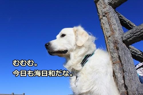 s-IMG_8079.jpg