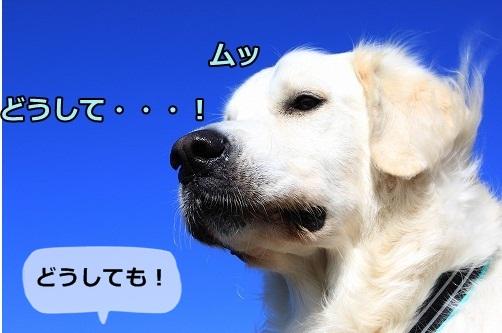 s-IMG_8082_20121025213626.jpg