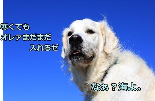 s-IMG_8087.jpg
