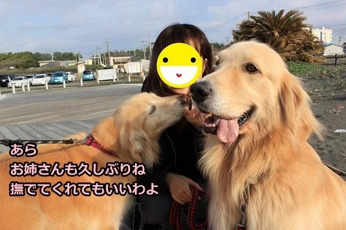 s-IMG_8215_20121030211349.jpg