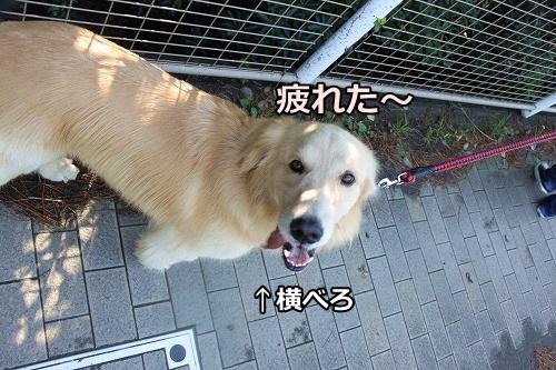 s-IMG_8373.jpg