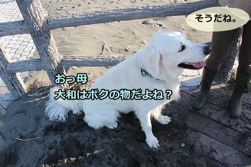 s-IMG_8419_20121115132456.jpg