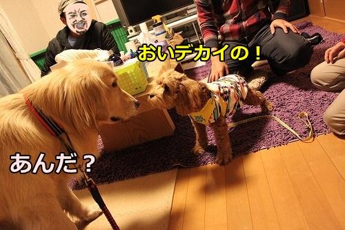 s-IMG_8539.jpg