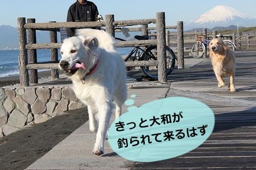 s-IMG_8666_20121207193551.jpg