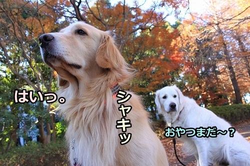 s-IMG_8734_20121213205221.jpg