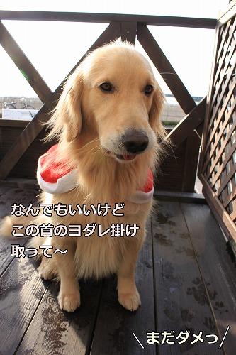 s-IMG_8806_20121224124643.jpg