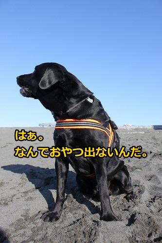 s-IMG_9374_20130120213614.jpg
